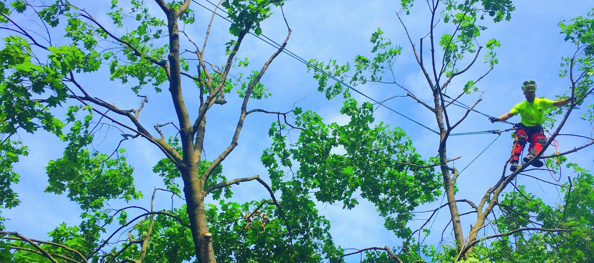 Aurora Tree Service | Certified Arborists Aurora, Ontario