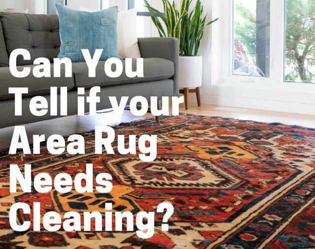 Area Rug Needs Cleaning