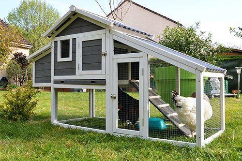 Rat Control Around Backyard Chicken Coops
