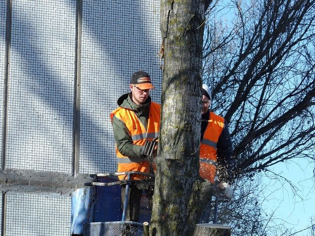 Beginners Overview to Tree Service