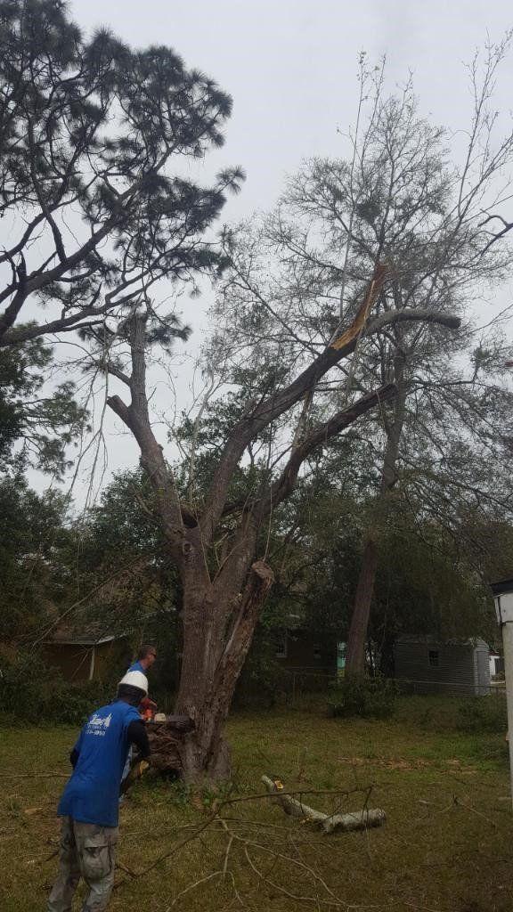 Tree Company Jacksonville Fl Shaw S Tree Service Llc