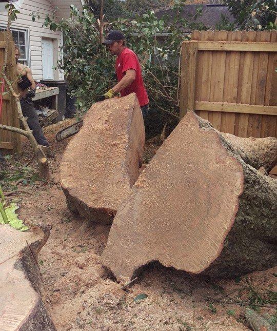Tree Clearing Jacksonville Fl Shaw S Tree Service Llc