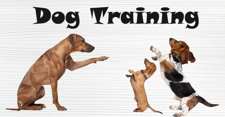 Dog Training Niles Mi Bunk Biscuit