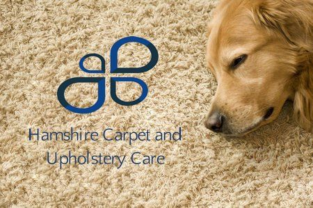 Why You Need A Professional Carpet Cleaners Near Me Service