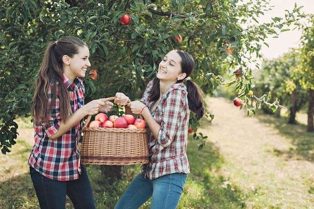 5 Best Places To Go Apple Picking In Wisconsin