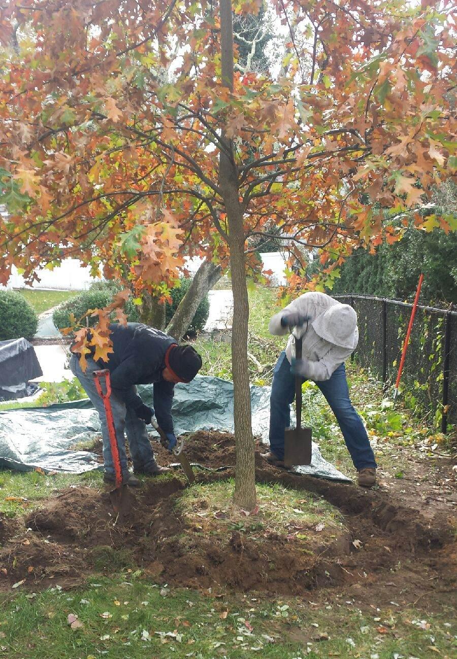 Tree Care Westchester County Ny Silva Tree Service Inc