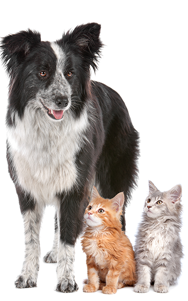 Vet Clinic In Las Vegas Southwest Las Vegas Nv Animal Hospital