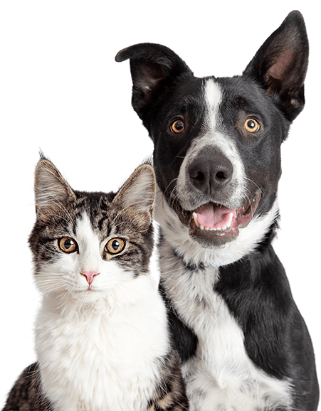 Vet Clinic In Las Vegas Southwest Las Vegas Nv Animal Hospital