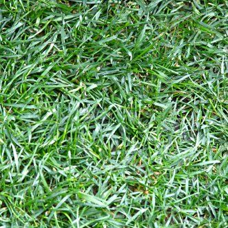 What Type Of Grass Do I Have