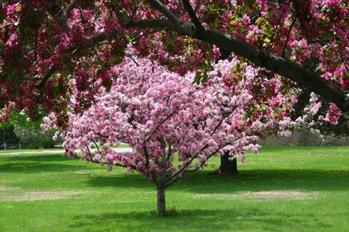 5 Purple Blooming Trees To Plant This Autumn