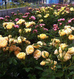 Garden Plants & Equipment - London | The Plantation Garden ...