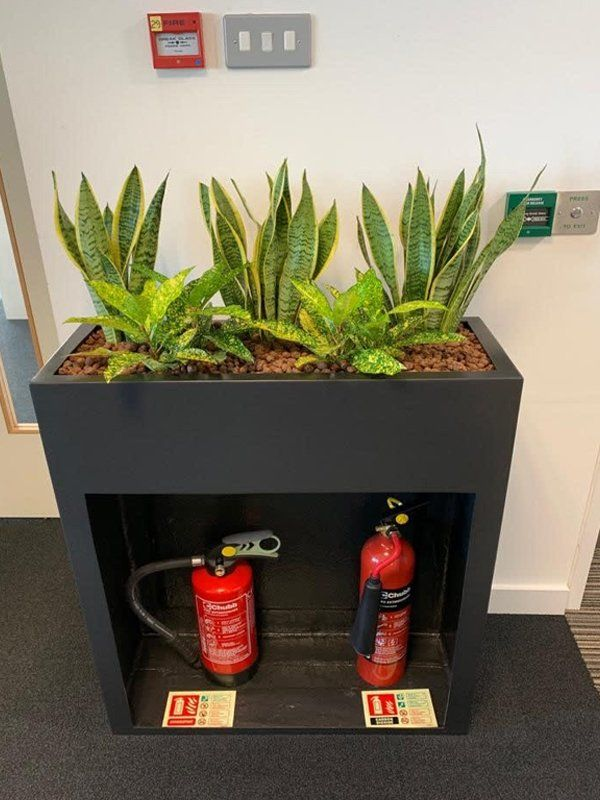 Interior Plant Displays For Offices