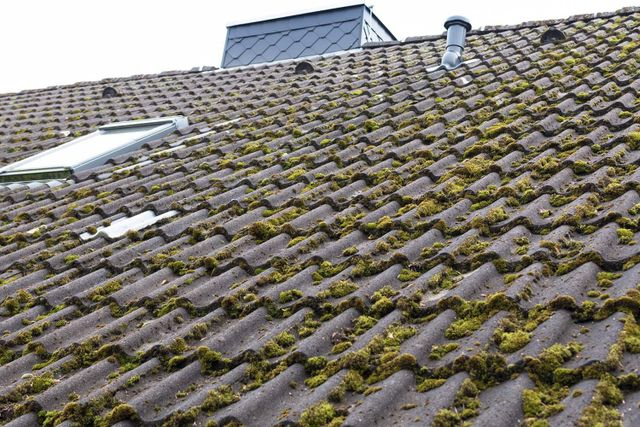 Remove Moss From Your Roof And Keep It Off