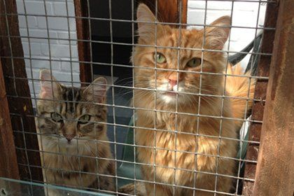 Cattery Cats Cradle Boarding Cattery