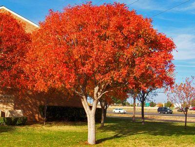 Tree Trimming Pruning Tucson Az Arizona Tree And Landscape Service Inc