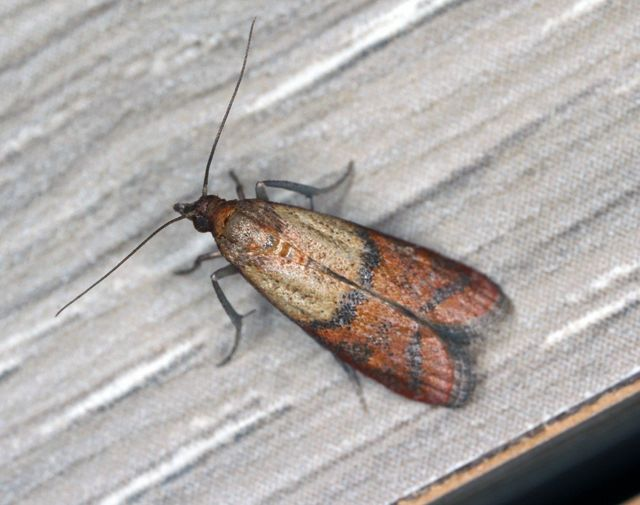 Watch Out For Indian Meal Moths This Winter