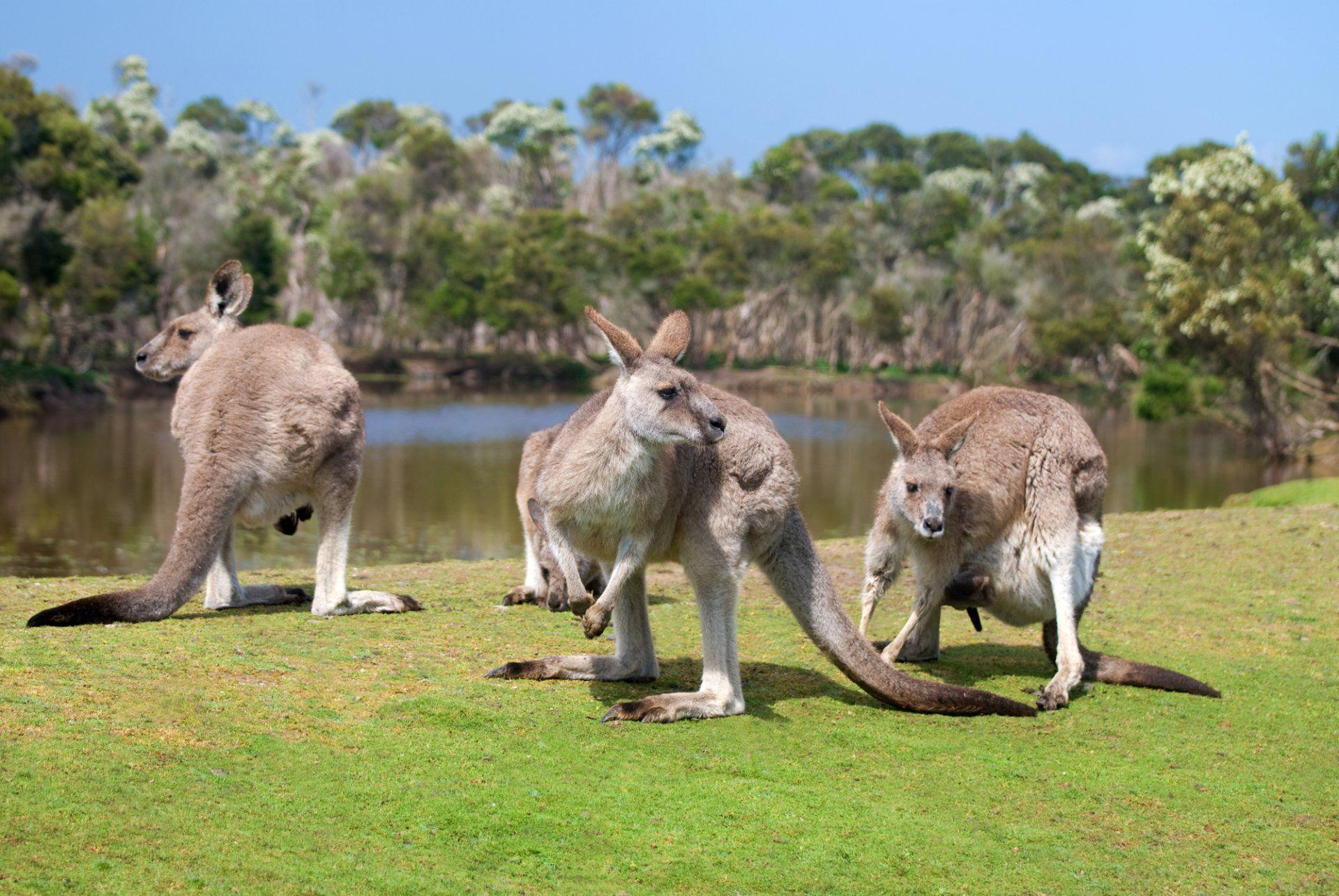 Wildlife Park In Arlington Wa The Outback Kangaroo Farm