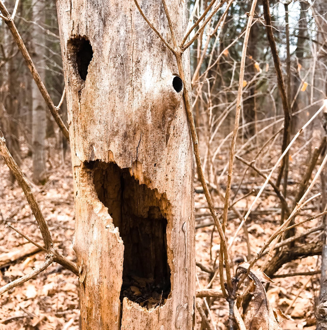 How To Identify A Dead Tree In Your Garden