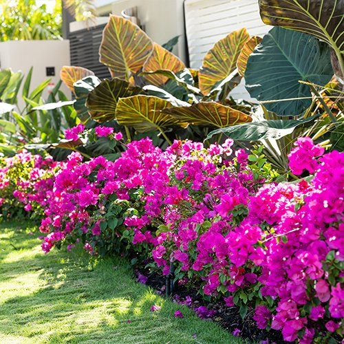 Flowering Services Colorado Springs Co Floral Gardening Inc
