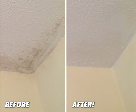 Mold Amp Mildew Remover Works Instantly Miraclemist Cleaner