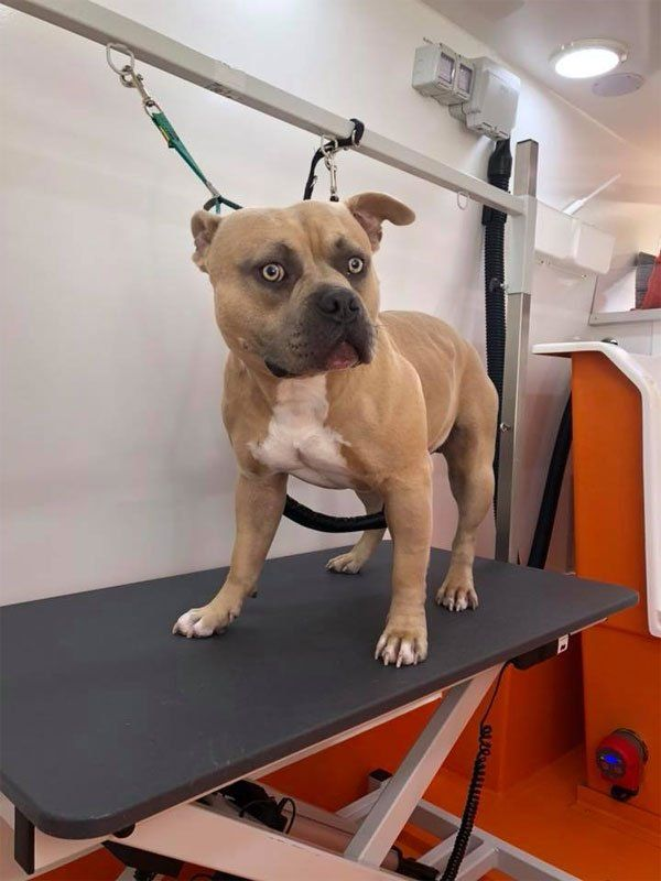 Dog Kennels In Bedworth