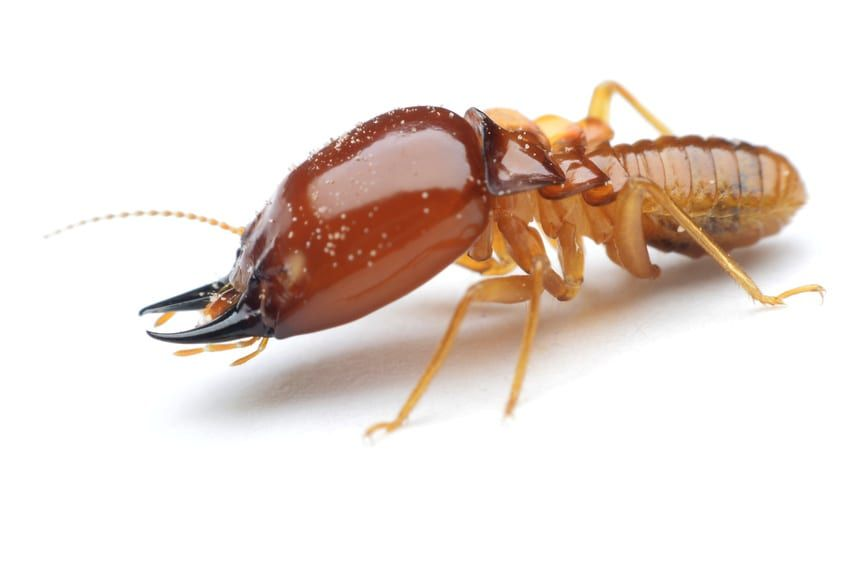 5 Warning Signs You Have A Termite Infestation In Your Home