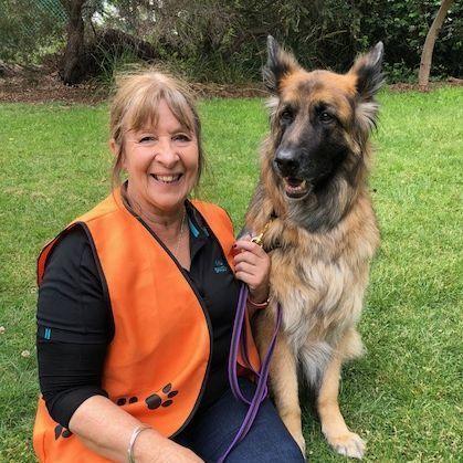 Vic Dog Teams Australia Story Dogs