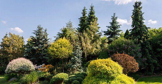 Landscaping Denver Co Timberline Gardens Landscaping Inc