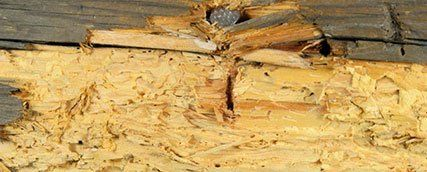 Woodworm-free property