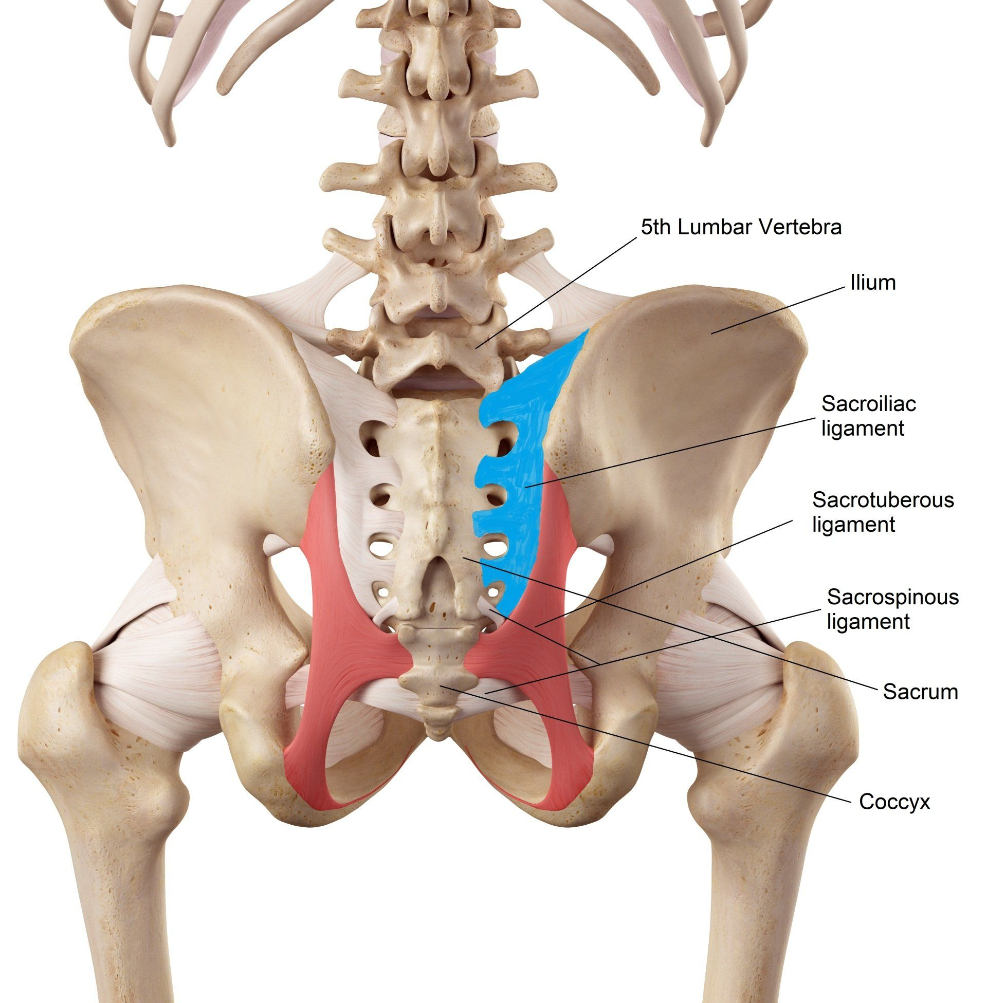 what is the si joint in the lower back