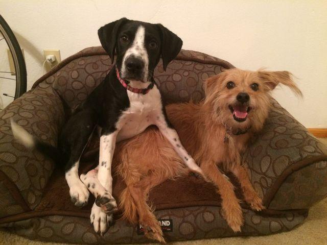 Pet Exams Taylorsville Ut Salt Lake Veterinary Services