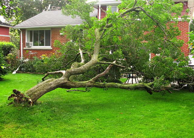 Emergency Tree Removal Jacksonville Fl The Branch Manager