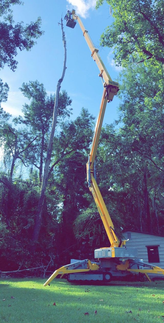Isa Certified Arborist Jacksonville Fl The Branch Manager