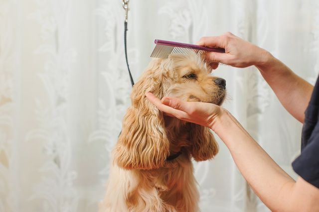 Considering Hiring A Mobile Pet Groomer? Here's What to Expect