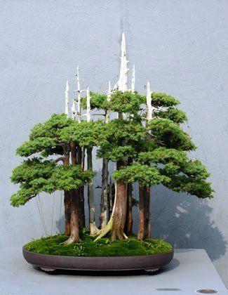 Arboretums Gardens Bonsai Society