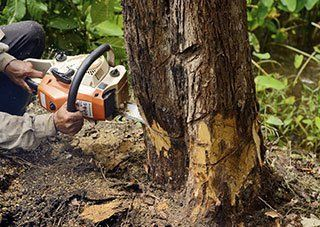 Arbortech Tree Service Clifton Park Ny Certified Arborist