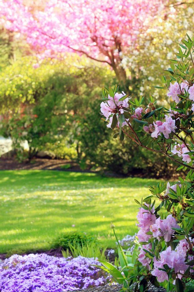 Low Maintenance Landscaping Plants For Florida