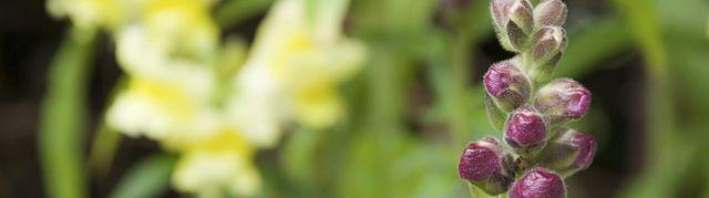 Happy Plant Garden Centre Gift And Garden Centre Aberdeenshire