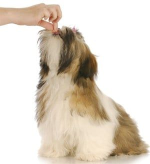 Shih Tzu Food Guidelines For Dogs Of All Ages