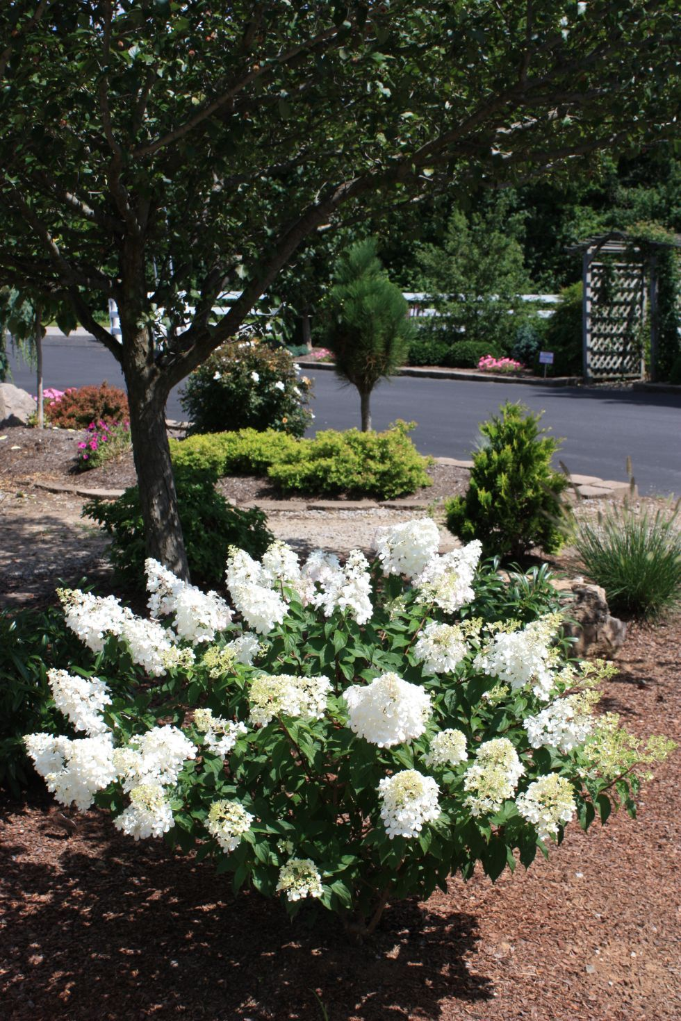 Garden Center & Tree Nursery in Nicholasville, KY | Glynn ...