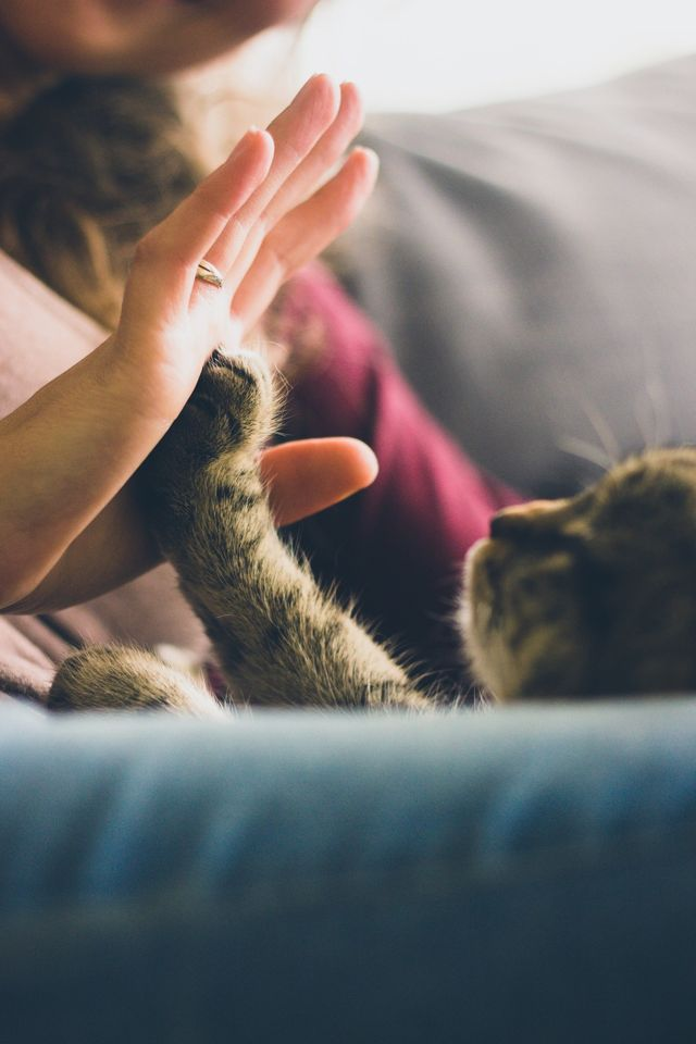 Recognizing And Treating Kidney Disease In Your Cat